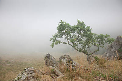 Pyrenees Photograph - Foggy Pyrenees Tree by Billy Currie Photography