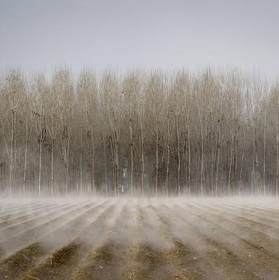 Bare Trees Photograph - Foggy Trees by Antonio  Luis Martinez Cano