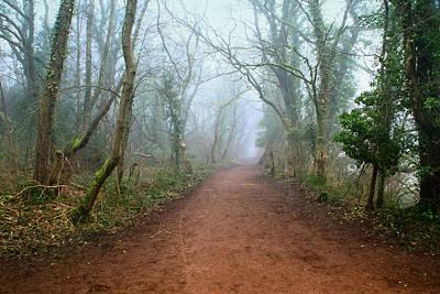 Foggy Woodland Trail Art Print by Julie L Hoddinott