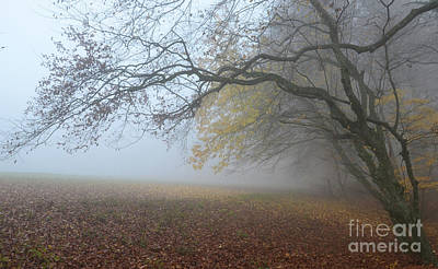 Art Print featuring the photograph Fogy Forest In The Morning 1 by Bruno Santoro