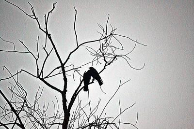 Photograph - Folie A Deux by Melanie Kirdasi