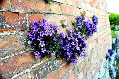 Photograph - Follow The Flower Brick Wall by Rene Triay Photography