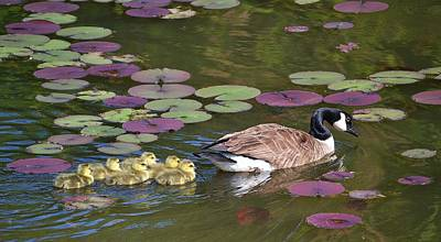 Art Print featuring the photograph Follow The Goose by Mary Zeman