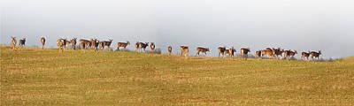 Dear Digital Art - Follow The Herd by Bill Cannon