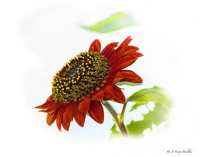 Digital Art - Follow The Sun Sunflower by J Larry Walker