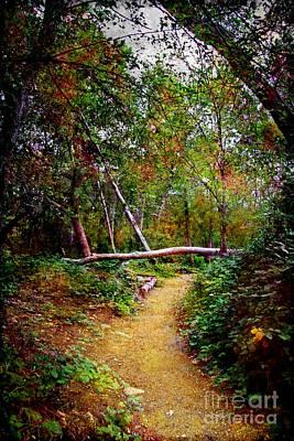 Photograph - Follow Your Own Path by Afrodita Ellerman