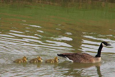Following Mamma Original