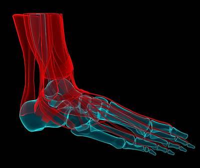 Human Joint Digital Art - Foot Anatomy, Artwork by Andrzej Wojcicki