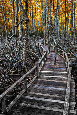 Tree Roots Photograph - Footpath In Mangrove Forest by Adrian Evans