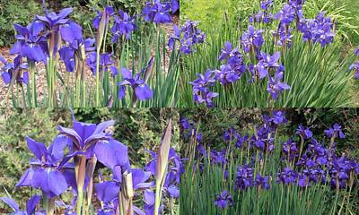 Photograph - for Iris by Tim Donovan