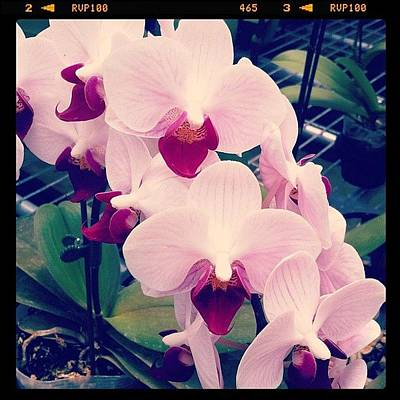 Orchids Photograph - For Some Reason, They Reminded Me Of by Aliya Zin