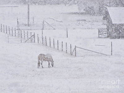 Foraging In The Snow Art Print