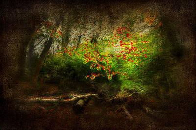 Forbidden Woods Print by Svetlana Sewell