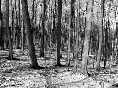 Photograph - Forest 2 by Douglas Pike