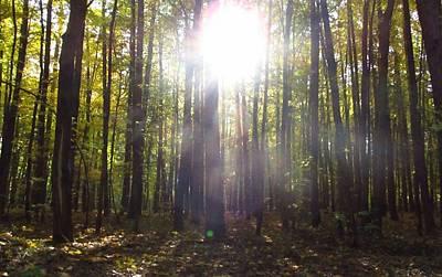 Tree Photograph - Forest And Light by Wojtek Kowalski