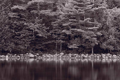 Forest At Jordan Pond Acadia Bw Original by Steve Gadomski