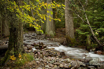 Shark Art - Forest Brook by Idaho Scenic Images Linda Lantzy