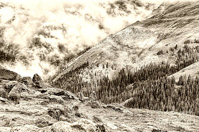 Rocky Mountains Photograph - Forest Canyon In The Colorado Rocky Mountains by Andre Babiak