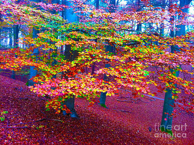 Forest Color Leaves Art Print