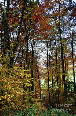Forest Colors Print by Bruno Santoro