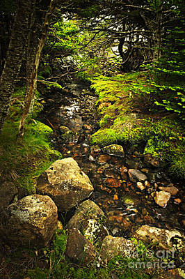 Photograph - Forest Creek by Elena Elisseeva
