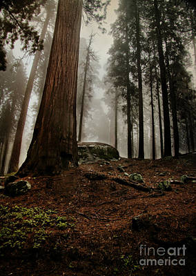 Forest Floor And Fog Art Print