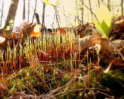 Photograph - Forest Floor by Cindy Wright
