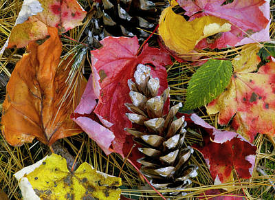 Forest Floor Portrait Art Print by Rich Franco