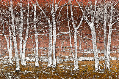 Photograph - Forest Ghosts by Debra and Dave Vanderlaan