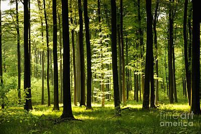 Forest Idyll Art Print by Renate Knapp