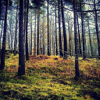 Forest Photograph - Forest In Cumbria by Nic Squirrell