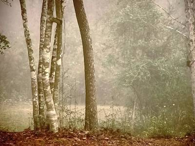 Forest In Fog Art Print by Robert Brown
