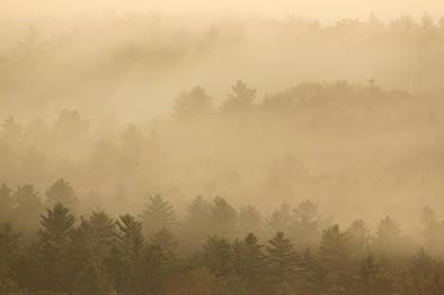 Quabbin Reservoir Photograph - Forest In The Fog by John Burk