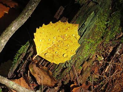 Forest Leaf Print by Pamela Turner