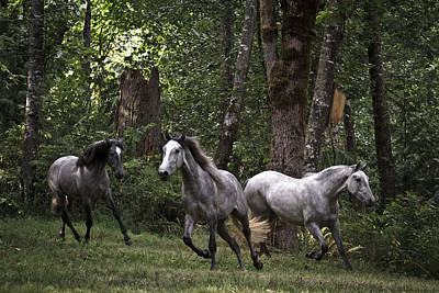 Forelock Photograph - Forest Mares D9710 by Wes and Dotty Weber