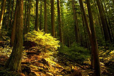 Vancouver Photograph - Forest by Matt  Trimble