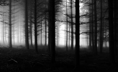 Photograph - Forest Of Dean by Mariusz Zawadzki