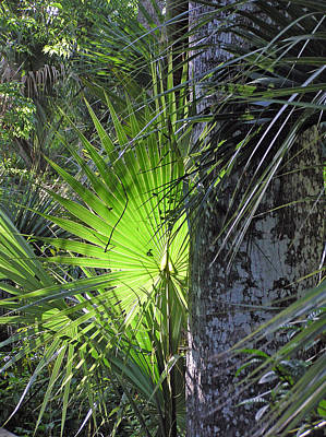 Art Print featuring the photograph Forest Palm by Lou Belcher
