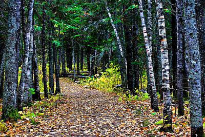 Forest Path In Autumn Art Print by Matthew Winn
