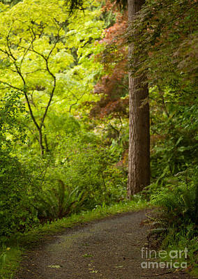 Rhodie Photograph - Forest Path by Mike Reid