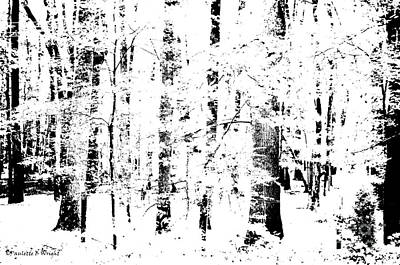 Photograph - Forest by Paulette B Wright