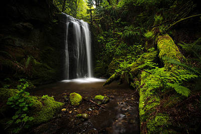 Tree Fern Photograph - Forest Pool by Mike Reid