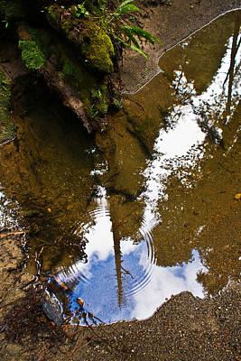 Jake Johnson Photograph - Forest Reflected by Jake Johnson