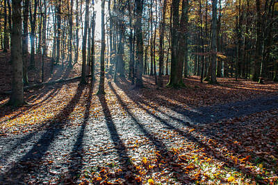 Photograph - Forest Shadows by Semmick Photo