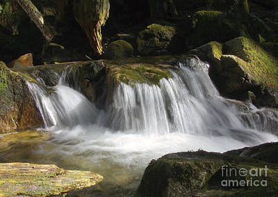 Photograph - Forest Stream 2a by Sharon Talson
