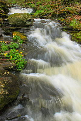 Marshes. Brooks Photograph - Forest Stream And Marsh Marigolds by John Burk