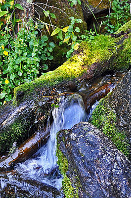 Photograph - Forest Stream by Cheri Randolph