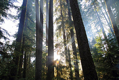 Photograph - Forest Sun Rays In Olympic National Park by Pierre Leclerc Photography