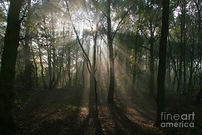 Photograph - Forest Sunrise by Ed Lukas