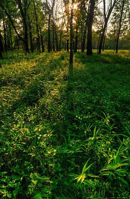 Forest Sunset Original